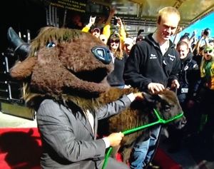 Corso picks the Bison!