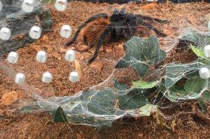 The Richmond Spider